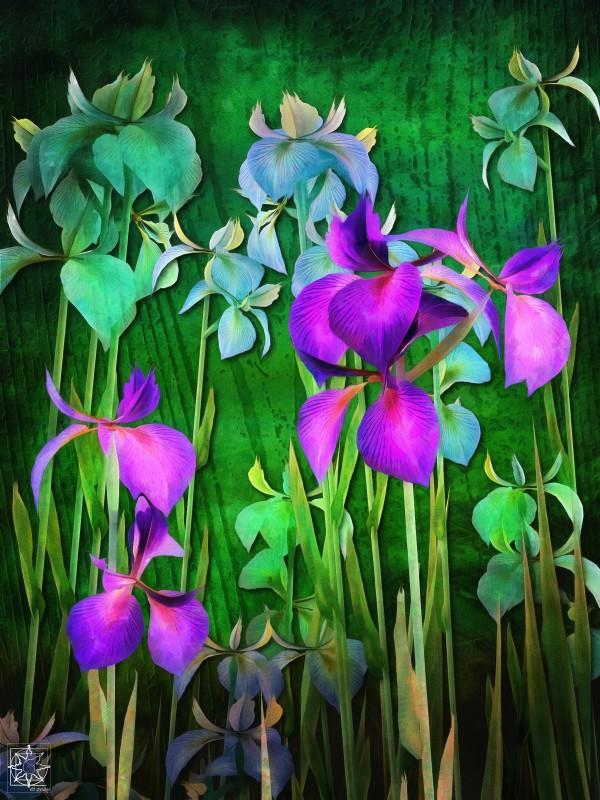 Iris Versicolor or Water Iris by ChrisHarrisArt