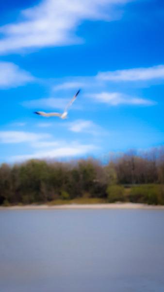 Dreamy Flight by Cindy Rogers