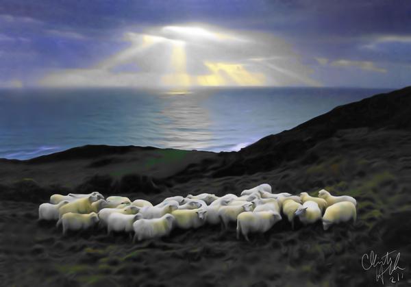 Sheep grazing by Clint Hubler
