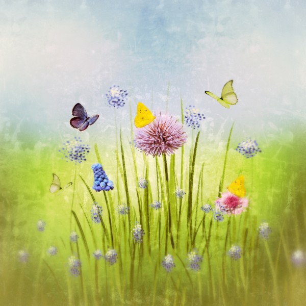 Spring meadow by Dagmar Marina