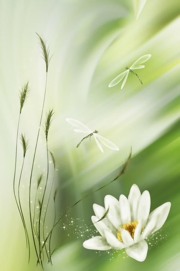 Libellenpaar  by Dagmar Marina