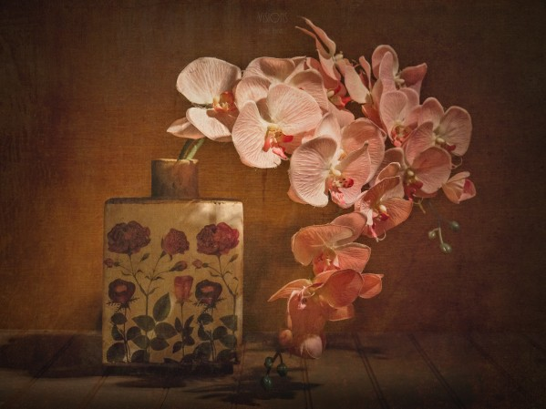 Etude Zen 7e by Daniel Thibault artiste-photographe