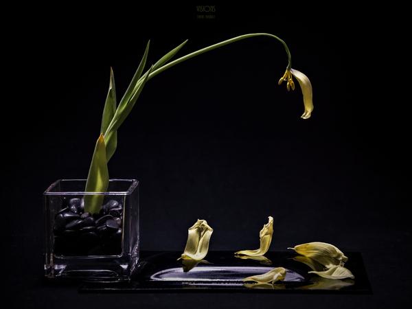 Etude Zen  9 h by Daniel Thibault artiste-photographe