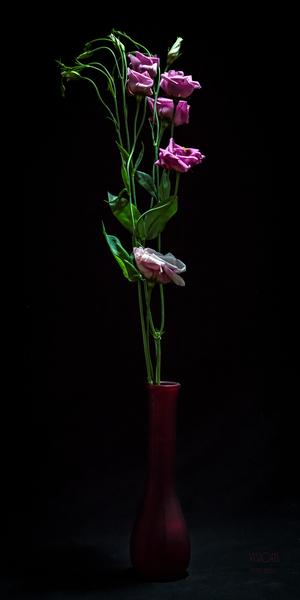 Etude Zen  11 a by Daniel Thibault artiste-photographe