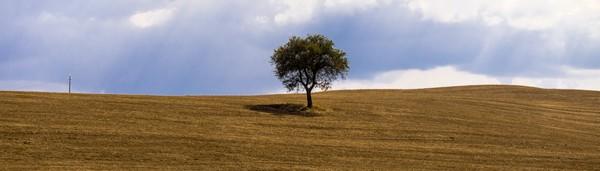 Tuscany Tree Digital Download