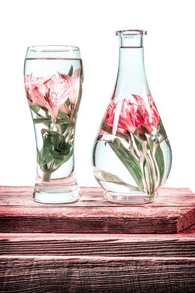 Cut flowers and pink lilies in a vase filled with water on a barn wood table in front of a white background Pink filter effect by Francois Lariviere