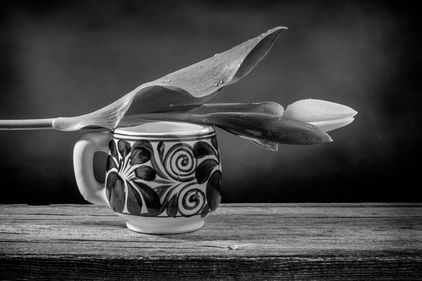 Still life of a closed  tulip placed on a Mexican pottery cup on a barn wood table black and white by Francois Lariviere