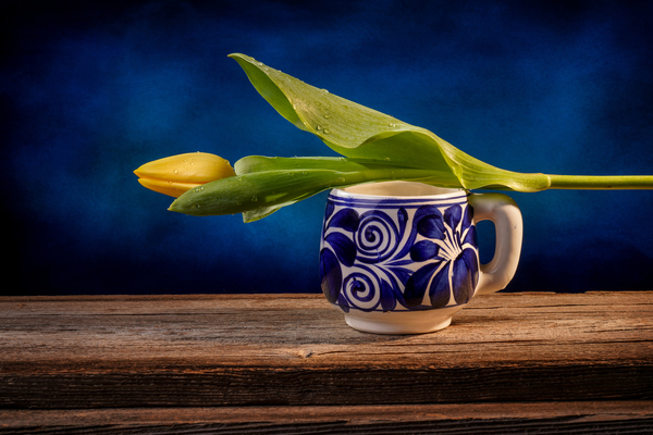 Still life of a closed yellow tulip placed on a blue and white Mexican pottery cup on a barn wood table in front of a blue backdrop by Francois Lariviere