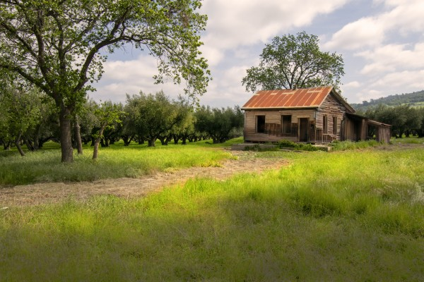 Abandoned House in Olive Orchard by Frank Wilson