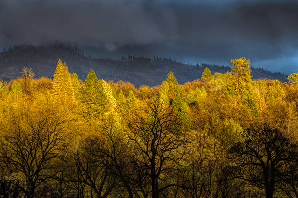 Backyard View to the East at Sunset by Frank Wilson