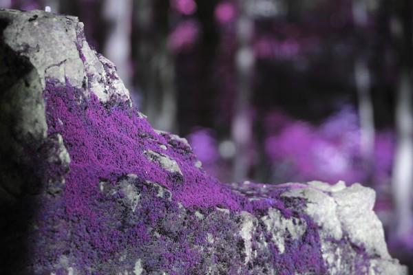 grape jelly moss by Irritated Eye