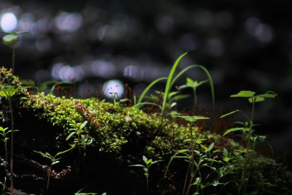 Beautiful Moss by Irritated Eye