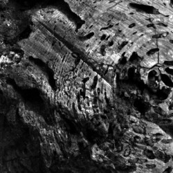 Black and White Tree Section 3 by Irritated Eye