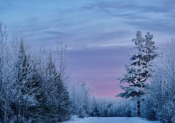 Winter Wonderland  Digital Download