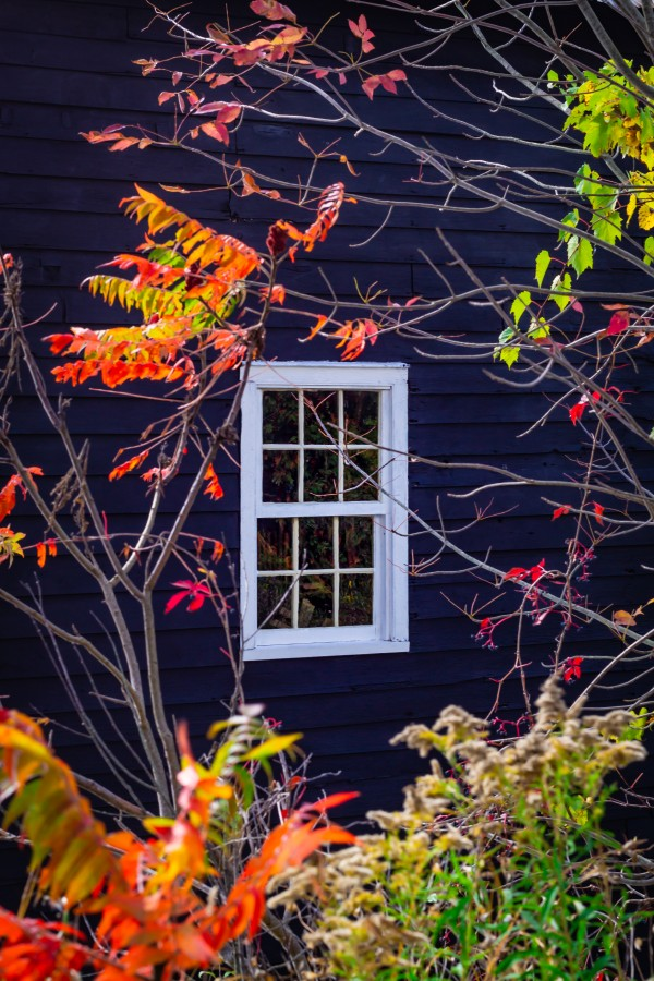 Autumn Window by MumbleFoot