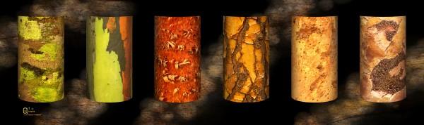 tree bark harmony by Stephen James