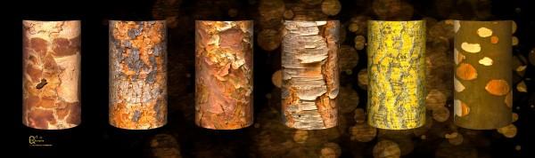 tree bark symphony by Stephen James