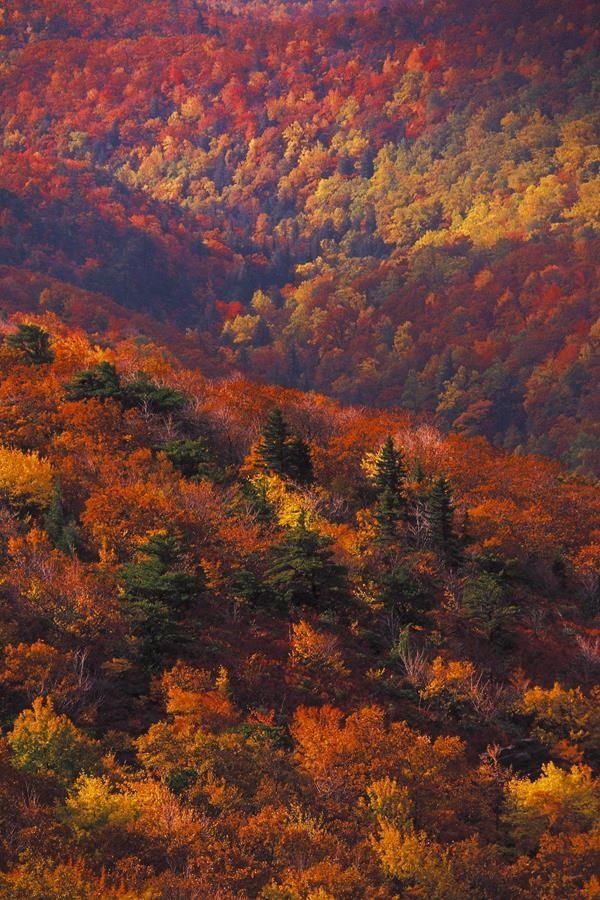 landscape_2_0441  Print