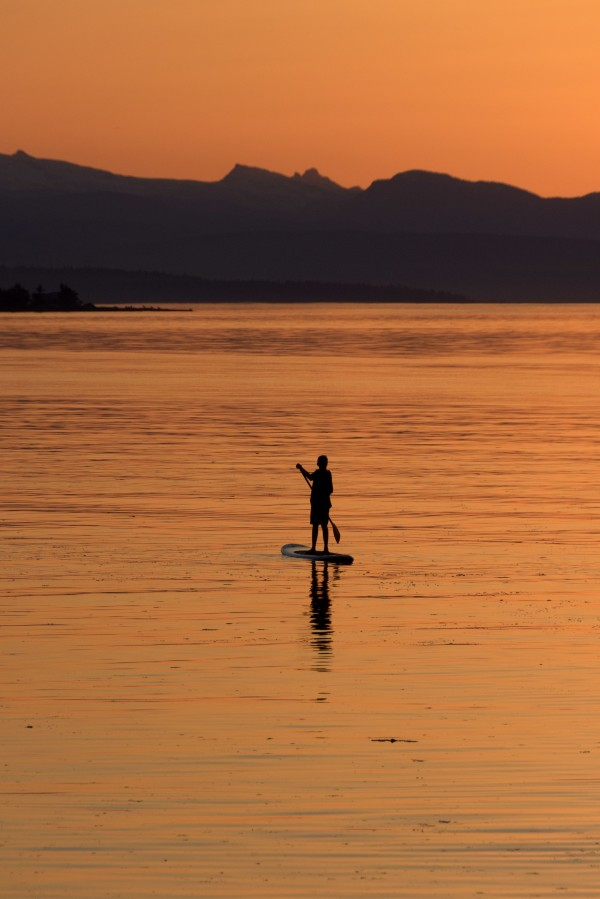 The paddleboarder by Violet Carroll