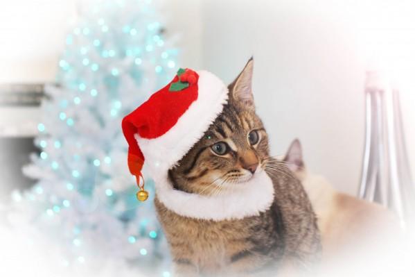 Merry Christmas and Happy New Year by Yuliya Marusina