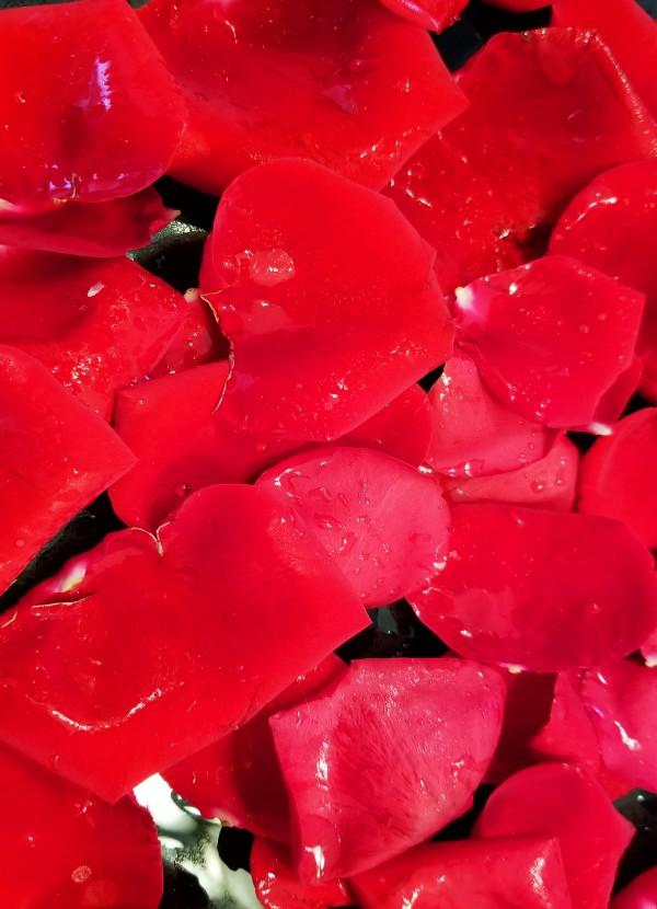 Red Roses by Yuliya Marusina
