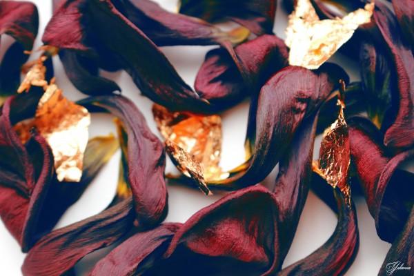 Burgundy Tulip by Yuliya Marusina