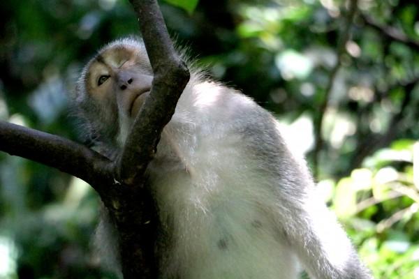 Monkey Forest by anartlova