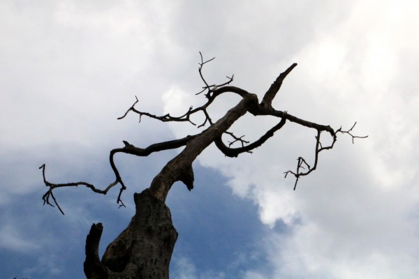 Link Tree by anartlova