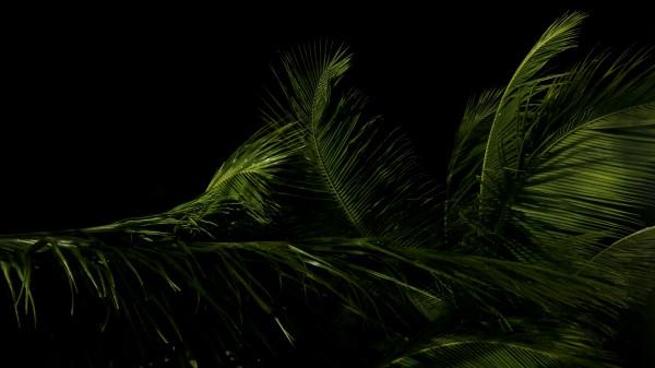 keep it green by anartlova