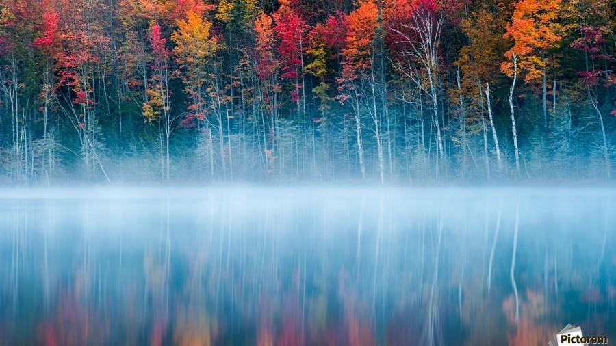 Morning Reflection  Print