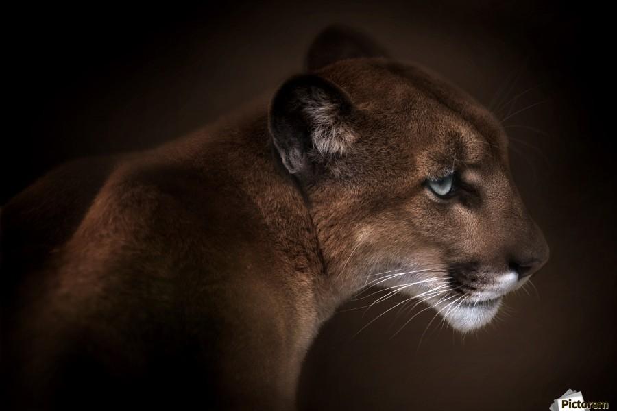Puma  Print