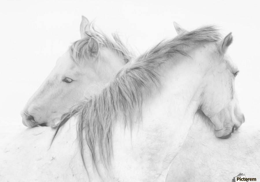 Horses  Print