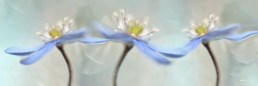 Dancing anemones  Print