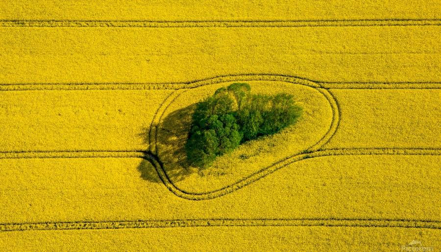 Island in the Field  Print