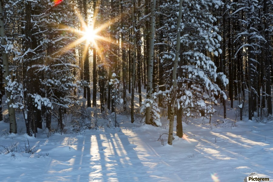 Sunburst coming through a snow covered forest; Kananaskis Country, Alberta, Canada  Print