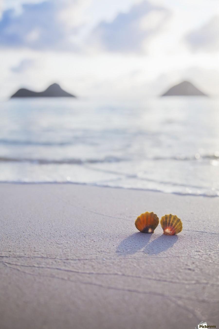A set of two rare Hawaiian Sunrise Scallop Seashells, also known as Pecten Langfordi, in the sand at Lanikai beach, with Mokulua islands in background; Honolulu, Oahu, Hawaii, United States of America  Print