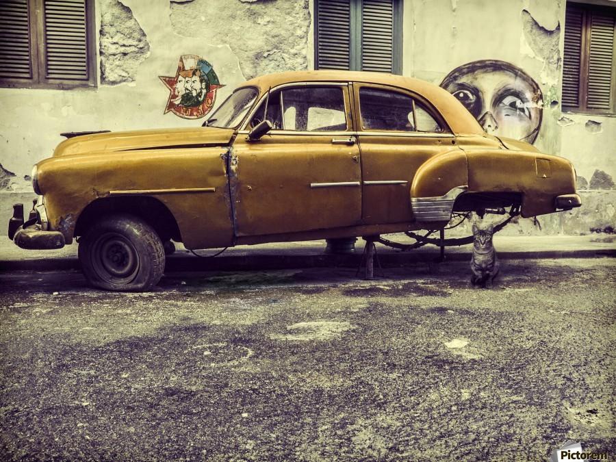 Old car cat  Print