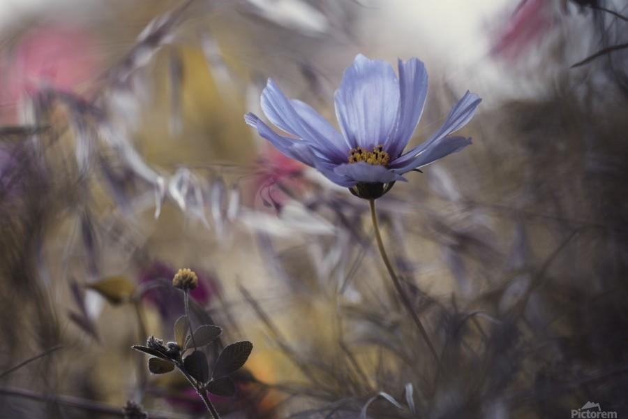 Things that flowers tell  Print