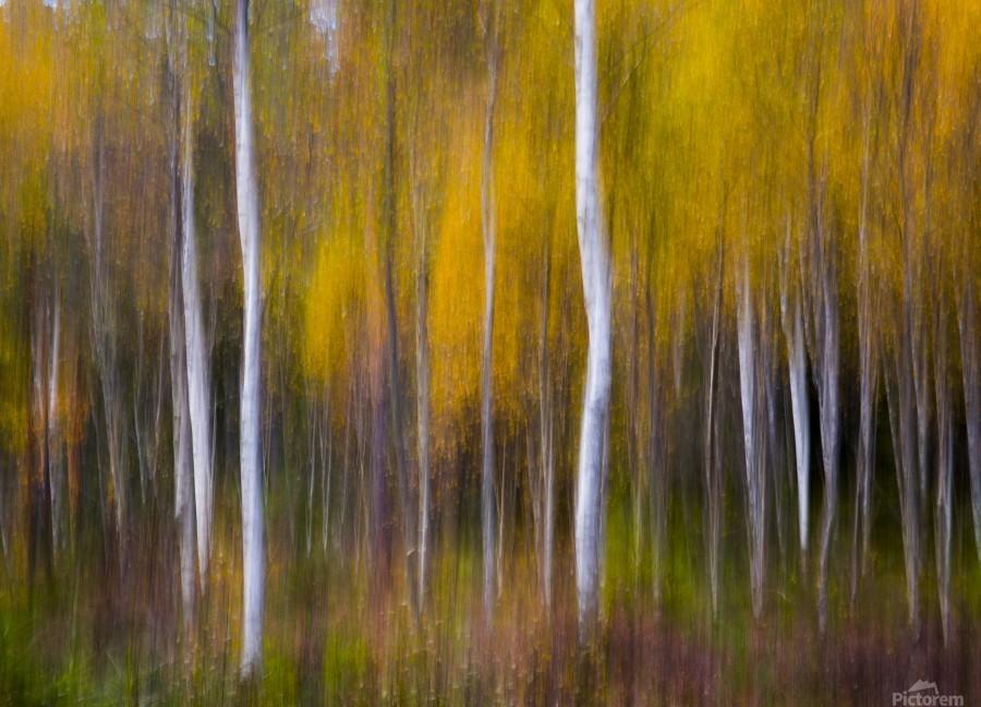 Abstract Fall  Print