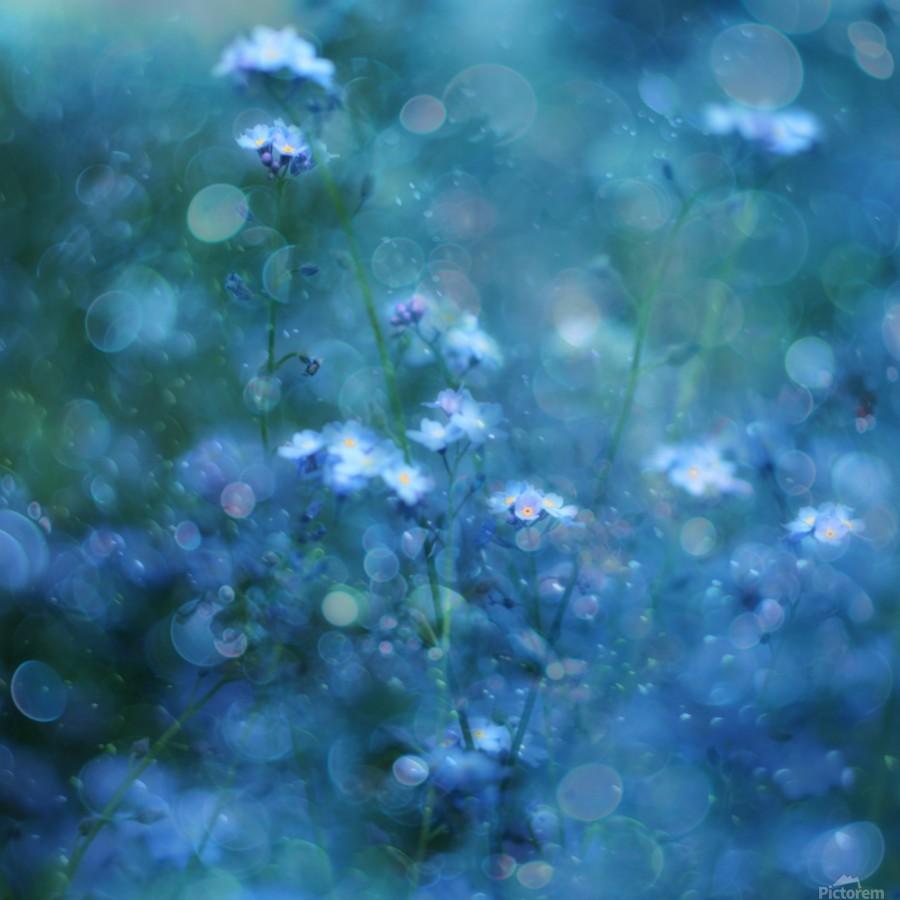 Blue Serenity  Print