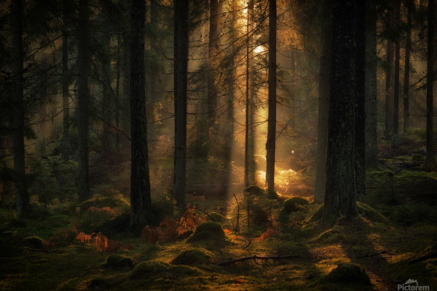 The light in the forest  Print