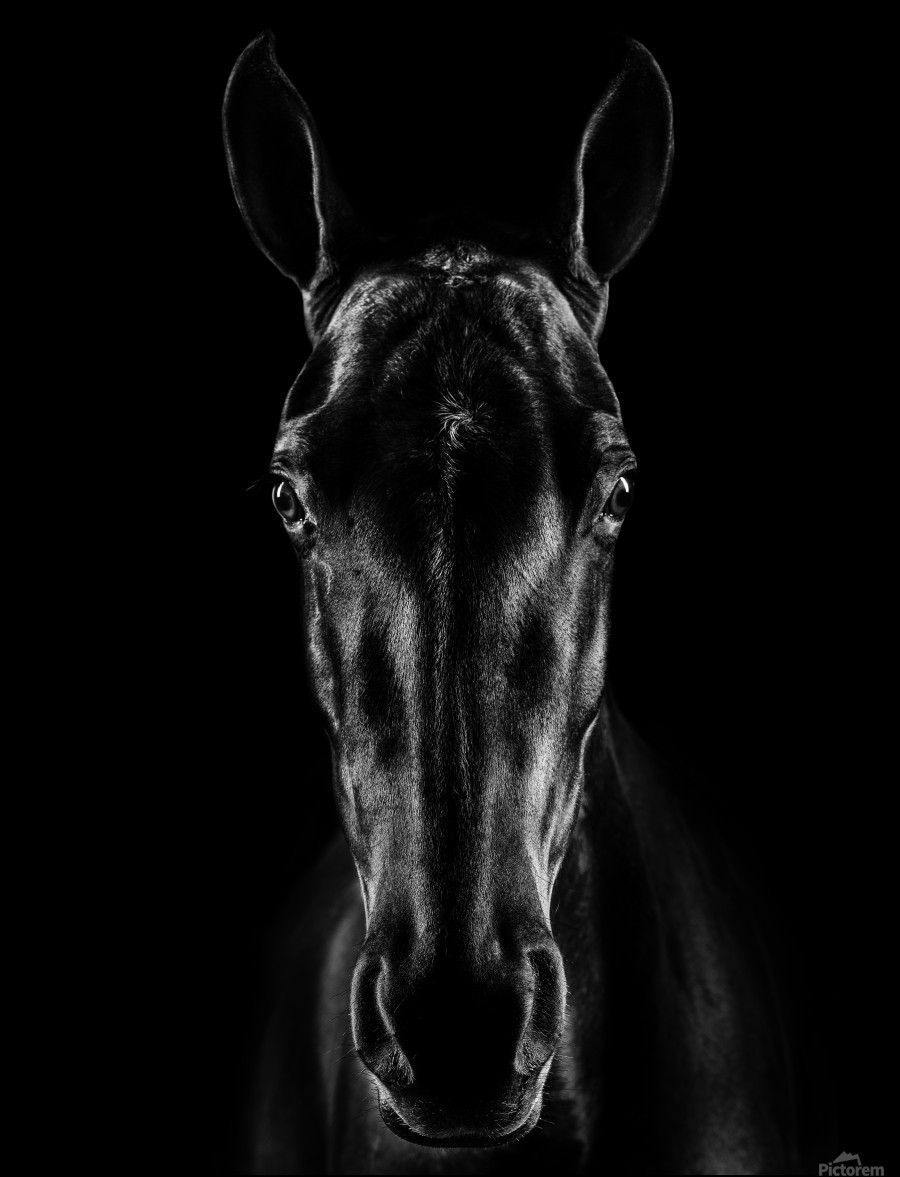 The Horse in Noir  Print