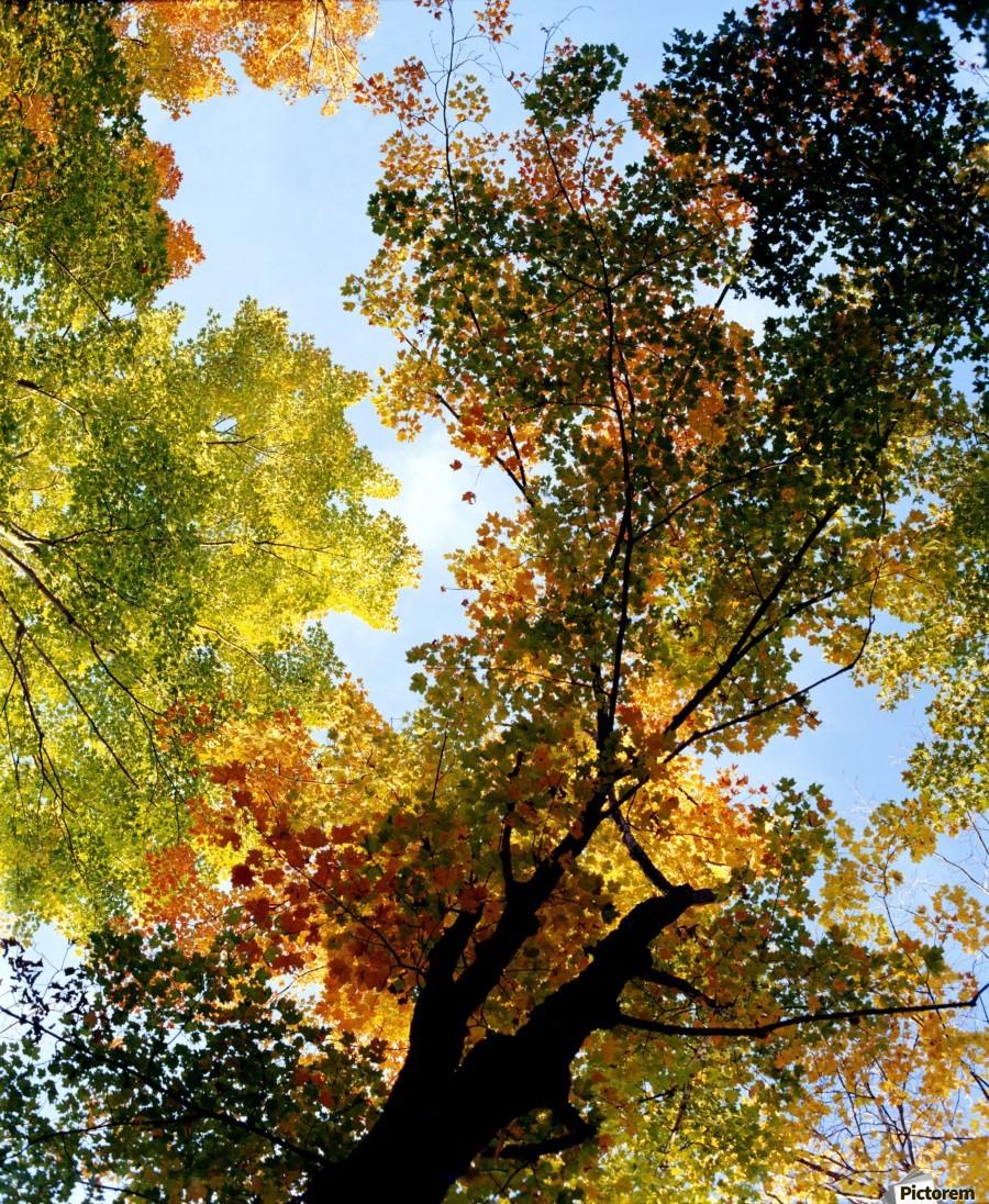 Autumn Trees Low-Angle  Print