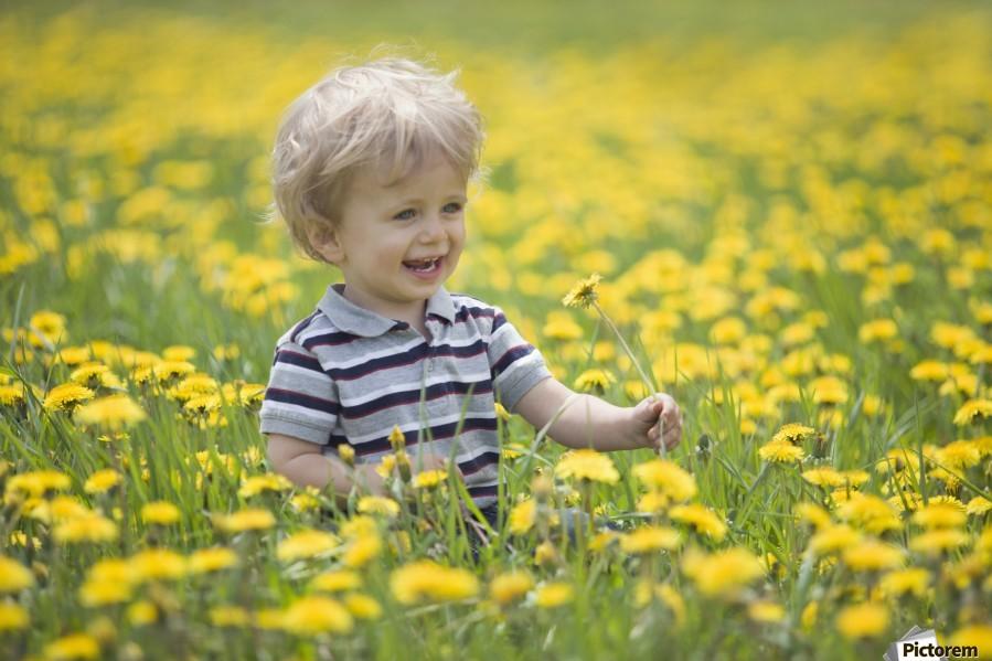 18-Month-Old Boy In Dandelion Field; Thunder Bay, Ontario, Canada  Print