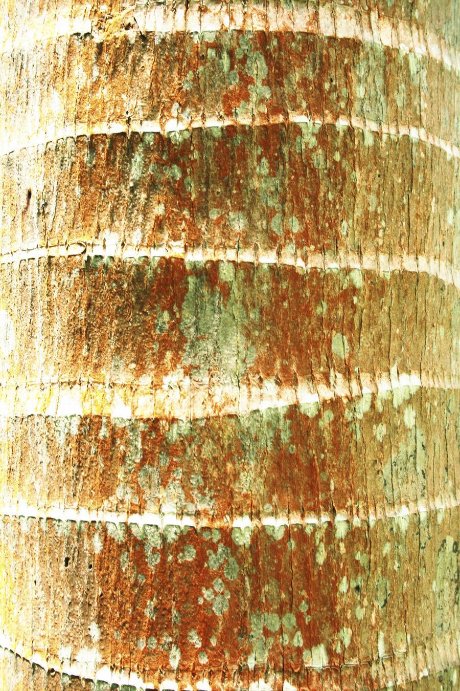 Hawaii, Oahu, Close-Up Of Coconut Palm Tree Bark Texture.  Print