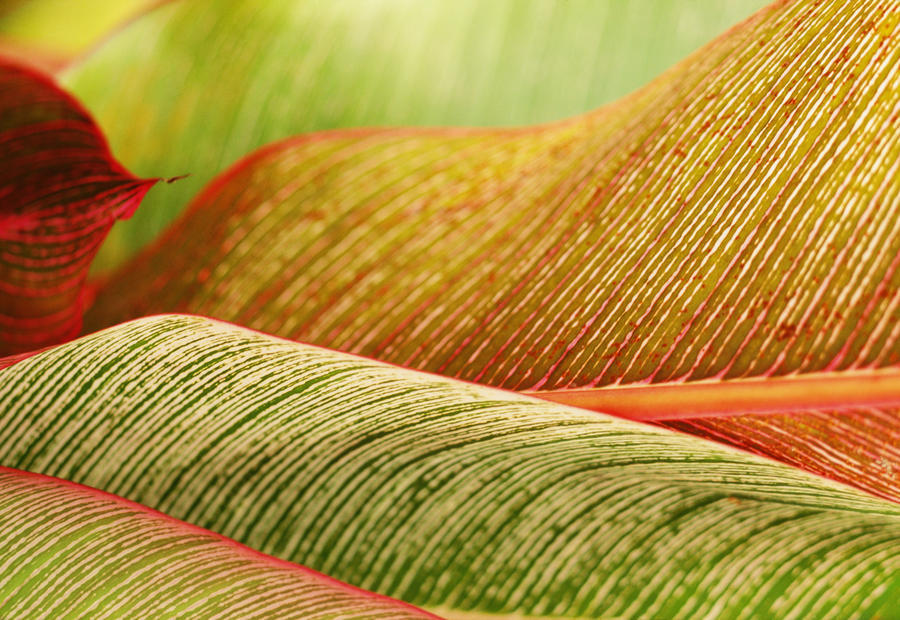Indonesia, Bali, Close-Up Of Tropical Plants, Leaves  Print