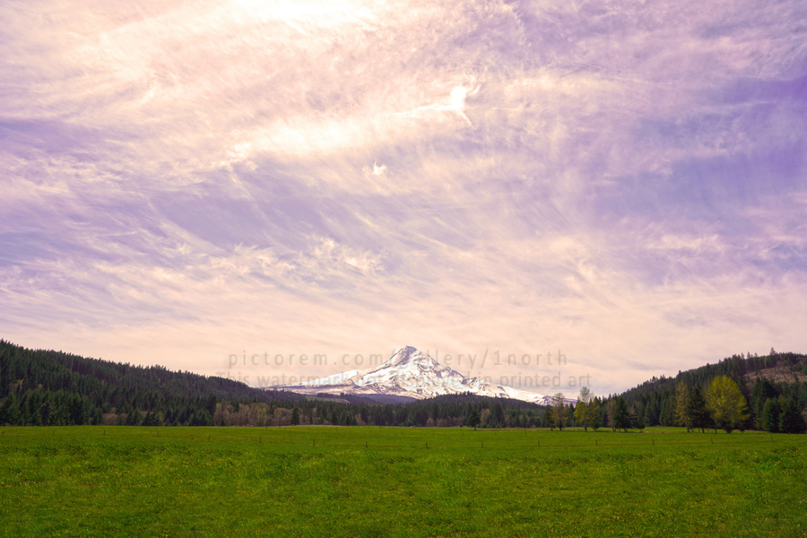 Mount Hood Bathed in Golden Rays at Sunset  Print