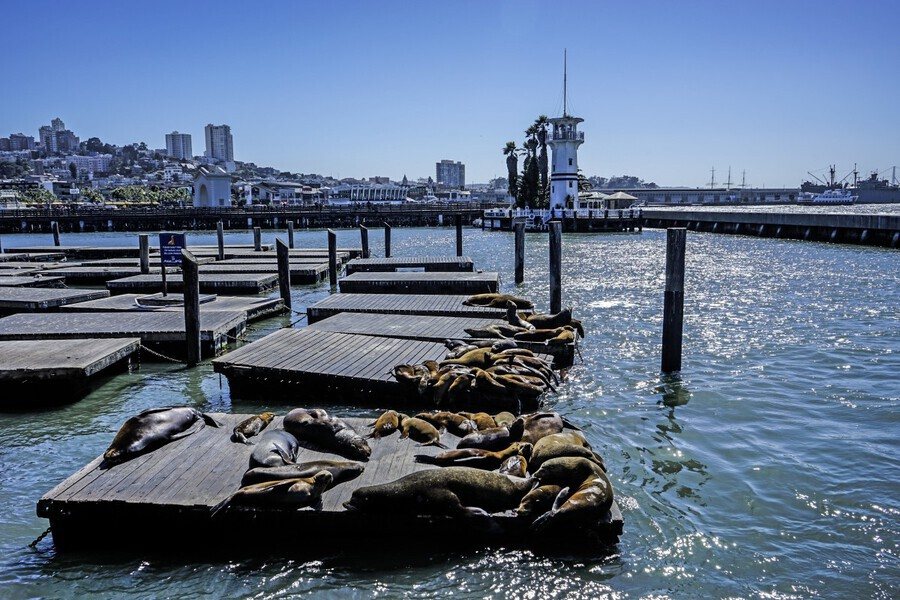 The Wharf @ San Francisco  Print