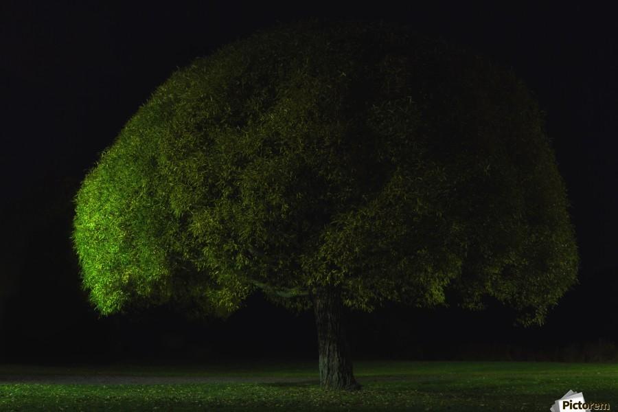 Mushroom tree by Stelios Kirtselis   Print