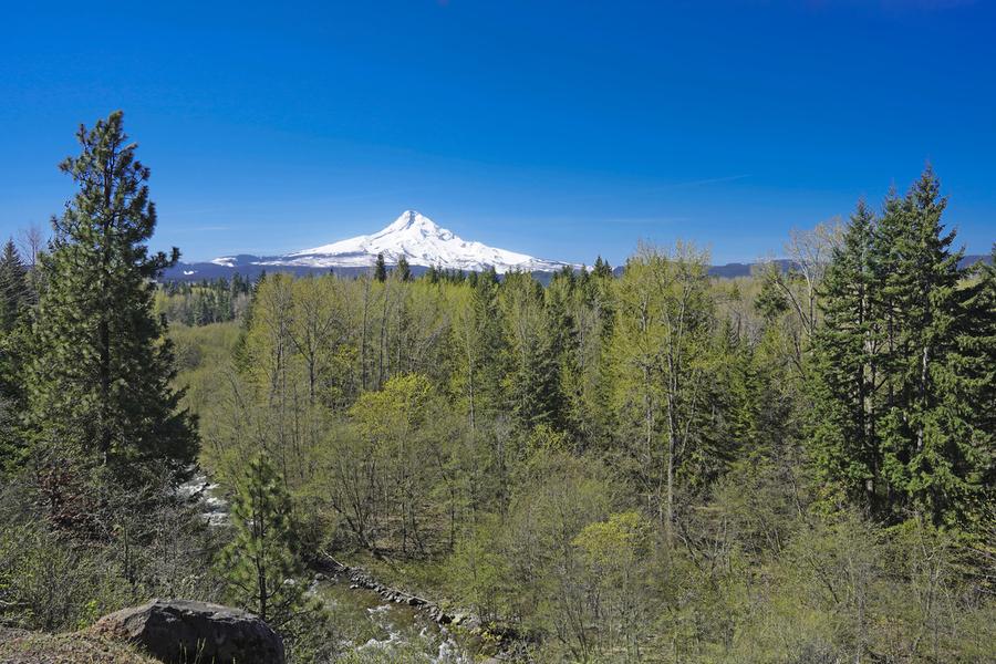 Mount Hood   Oregon  Print